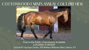 Cottonwood Farms Annual Walking Horse Colt Preview